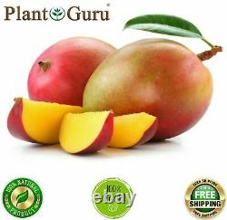 Mango Butter Raw 16 oz / 1 lb 100% Pure Unrefined Organic For Skin, Body, Hair
